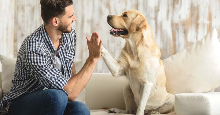 Man and dog high fiving