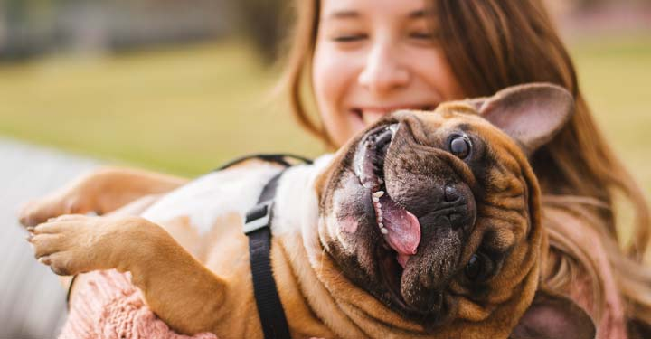 Woman smiling while holding French bulldog with tongue out