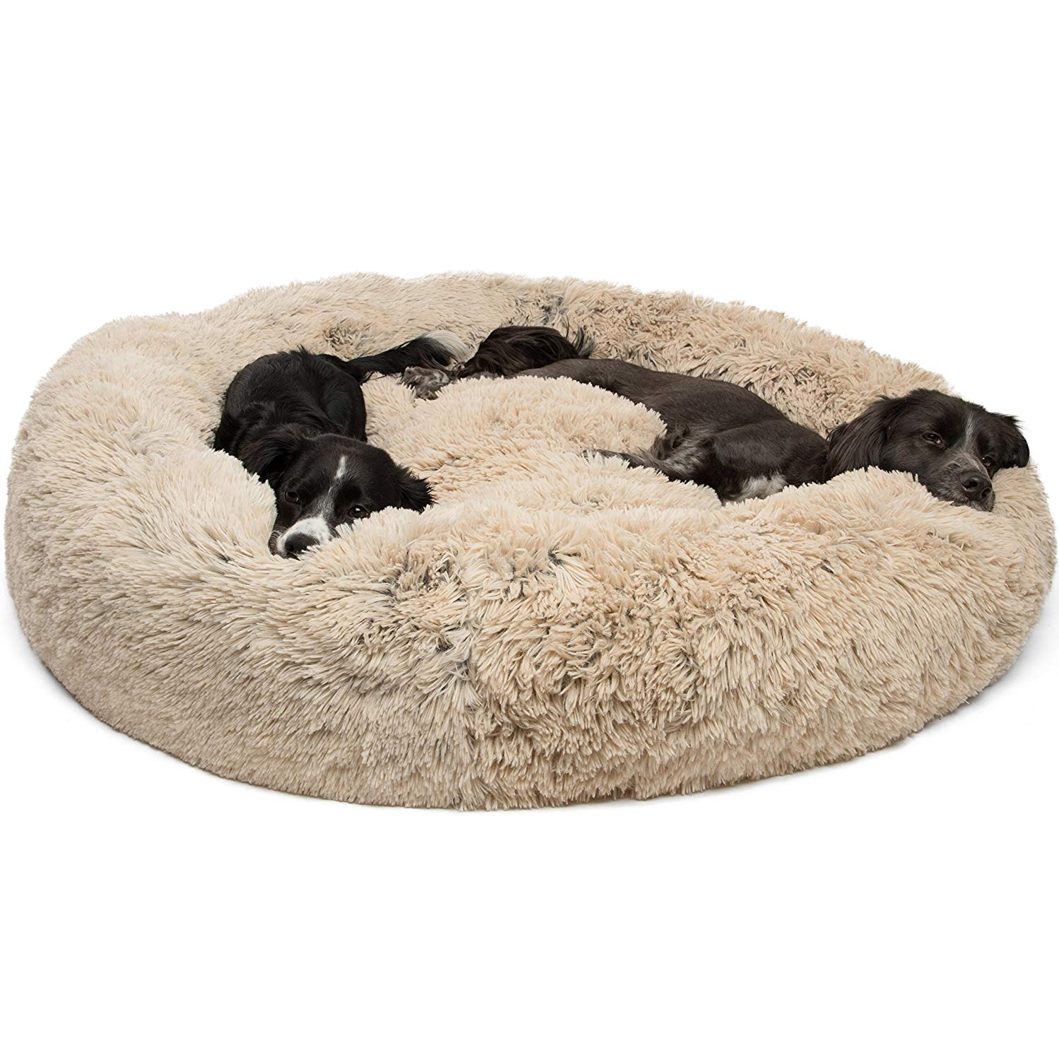 Best Dog Beds Top Rated Dog Beds 2019 American Kennel Club