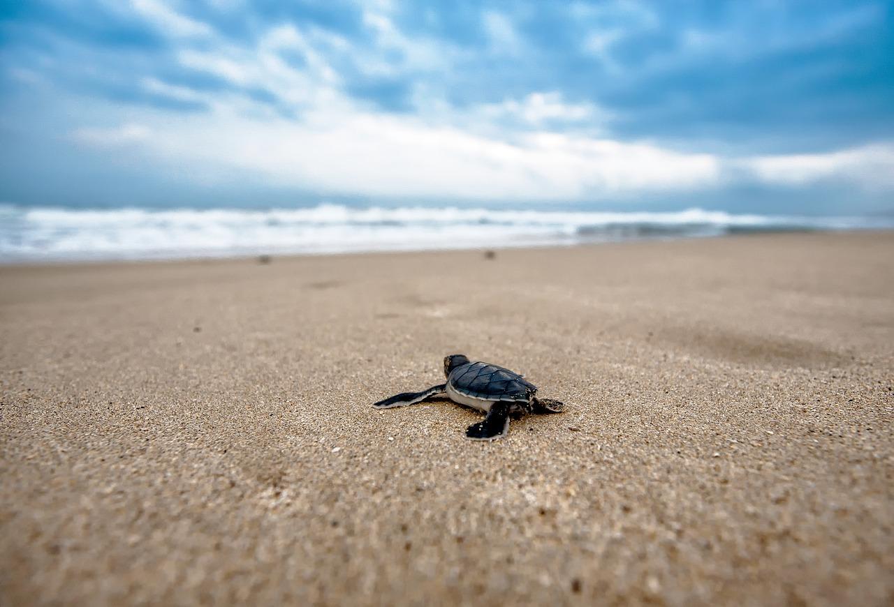 turtle-2201433_1280.jpg?1558690698