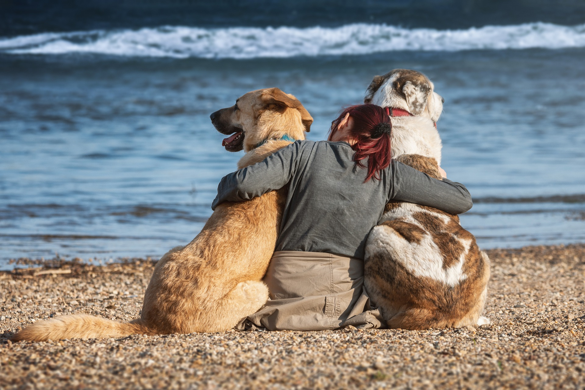 dogs-4220163_1920.jpg?1566296204