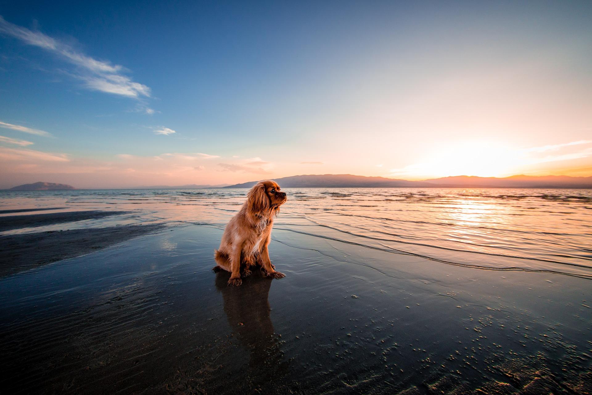 beach-1854123_1920.jpg?1566762294