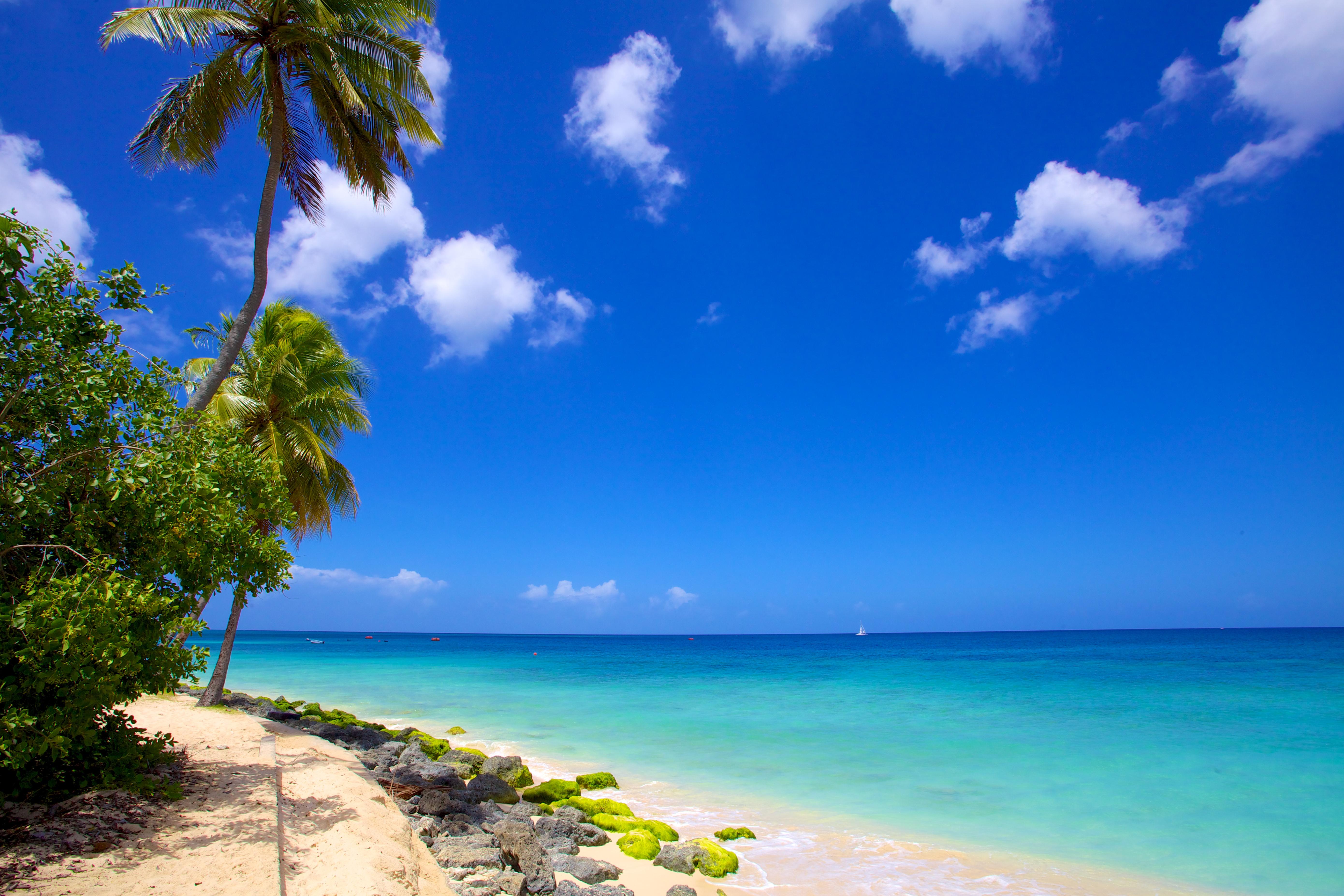 barbados_paradise_beachIMG_8487.jpg?1572974293
