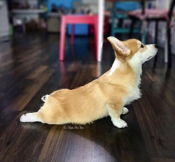 home yoga memes - updward dog