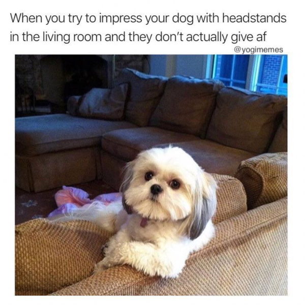 working-out-from-home memes - dog impressed