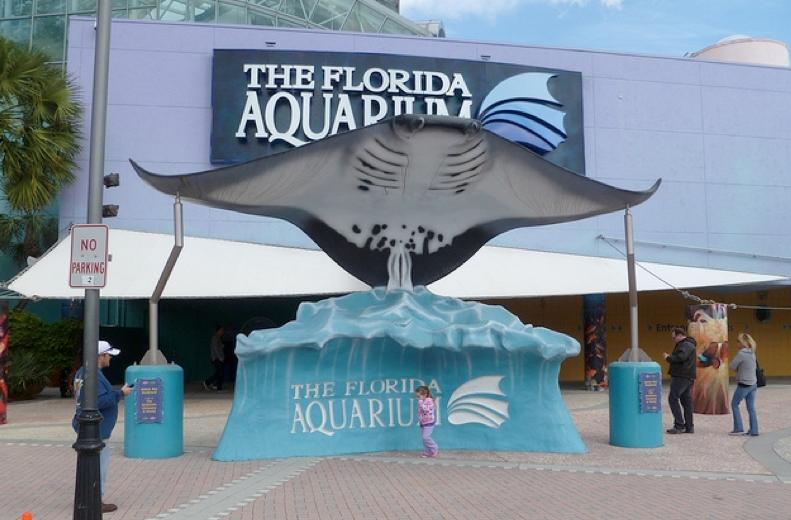 Aquarium store brandon fl the aquarium fish store pet for The fish store