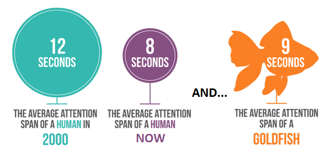 human attention span graph