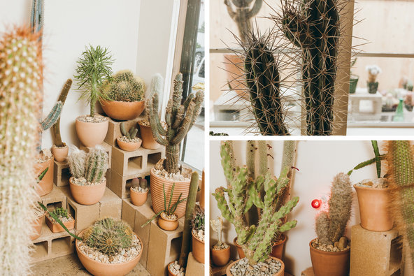The Cactus Store