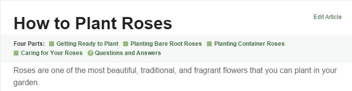 Roses_Dumb_Down.jpg