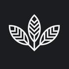 Designbysoap Ltd