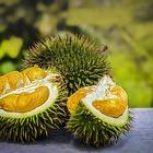 Durian wholesale
