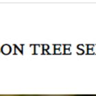 Tucson  Tree Service