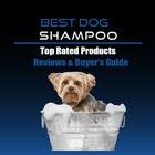 bestshamp bestshamp