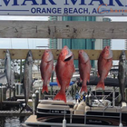 Orange Beach Fishing Trip