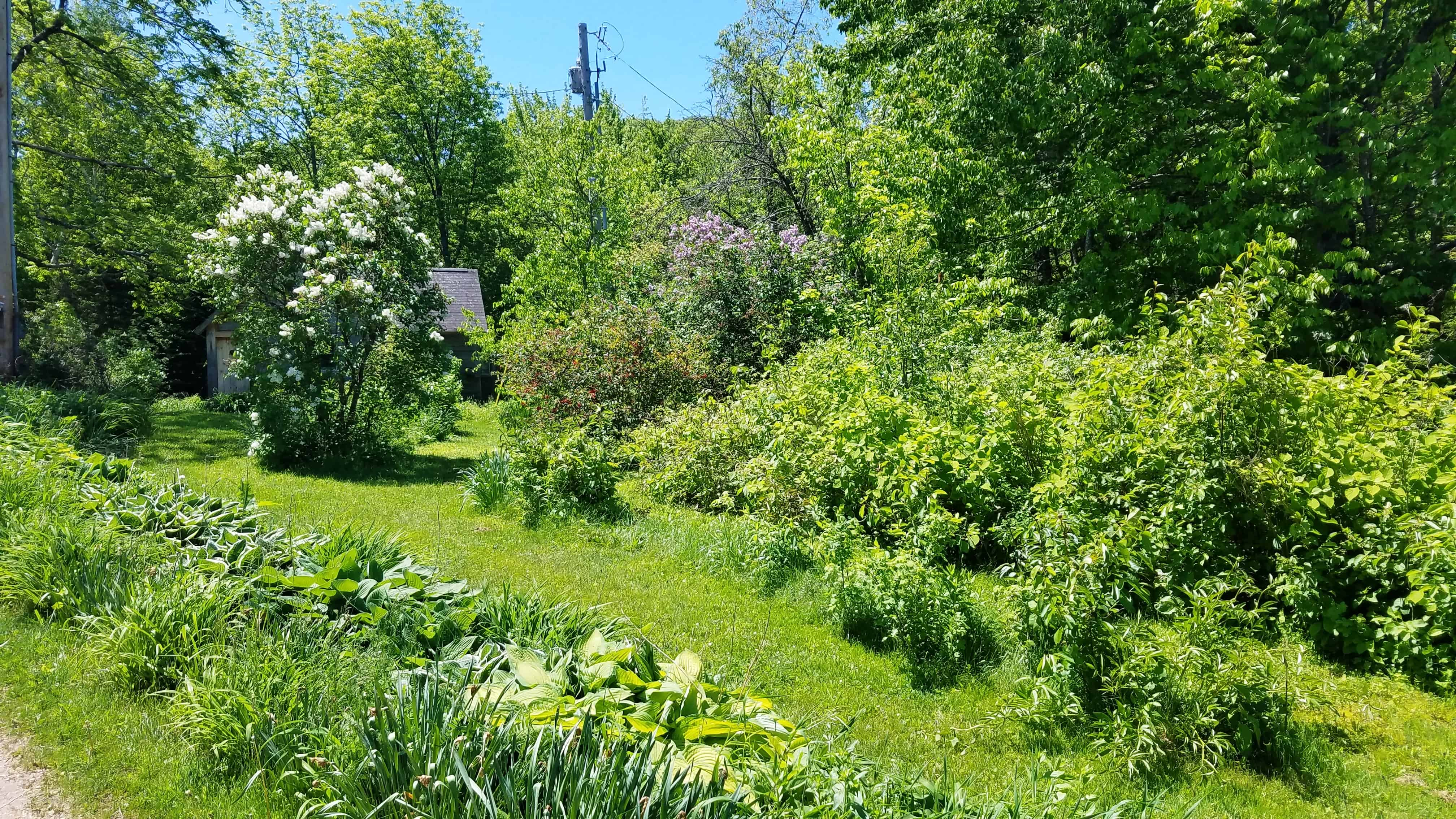 Landscaping 115 Sandwich Notch Road, Thornton, NH 03285 Alpine Lakes Real Estate