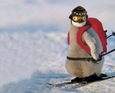 Penguin%20qui%20fait%20du%20ski.jpg