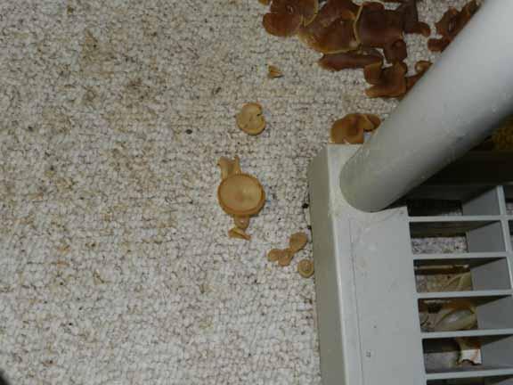 identify carpet fungus carpet vidalondon. Black Bedroom Furniture Sets. Home Design Ideas