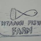 Mtaani Fish Farm