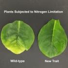 Nitrogenics