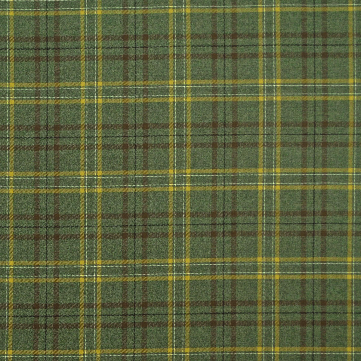 Edinburgh Olive Fern