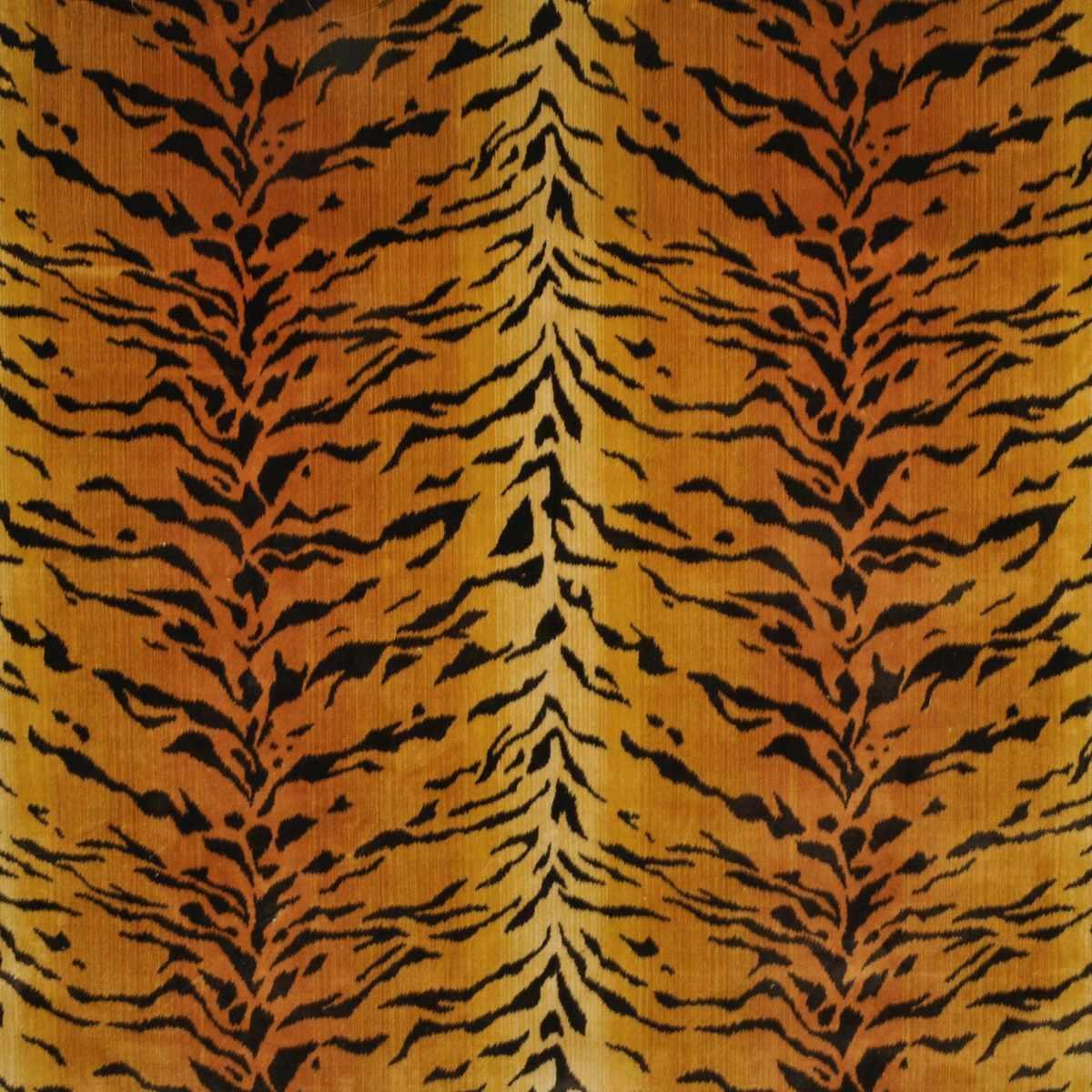 Tanzania Tigre