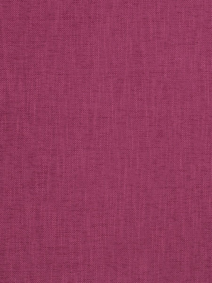 Zenith Fuchsia