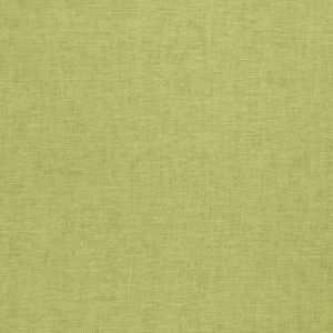 01838 Eucalyptus