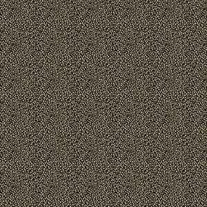 Lysiloma Leopard