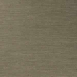 50299W Salix Driftwood 13