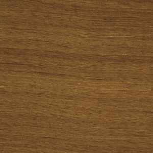 Shalini Cedar