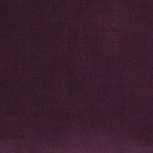 02338 Eggplant