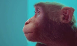This film explains synesthesia with the help of Steve Reich and a CGI Monkey