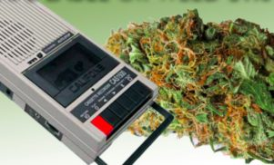 Play a 4/20 quiz: Tape Label or Weed Strain?