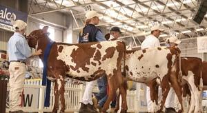 International Dairy Week kicks off