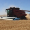 2015 7140 Case IH Combine with 40ft MacDon Front