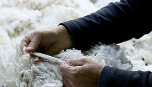 Wool prices come off dramatically