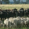 BestWool/BestLamb and BetterBeef combined for two day bonanza in Bendigo