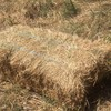 Grass Hay small squares