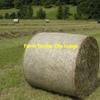 Irrigated Barley Hay & Balansa Clover in 5x4 Rolls