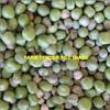 7-8mt Pea Seed