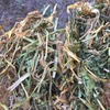 Delivered A1 Vetch Hay in 8x4x3 Bales