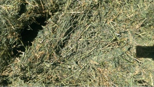 Lucerne Hay in 8x4x3's For Sale, 150 Bales left