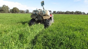 Sheep/light weight (young) cattle Agistment available - Irrigated Pasture