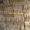 Awnless dictator 2 barley Hay Bales