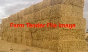 Barley straw old season