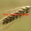 100mt of Feed barley For Sale Ex Farm Around F3