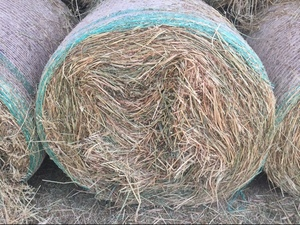 Vetch oaten hay