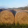 1000 of 5x4 Rolls of Header Trail Barley Straw For Sale