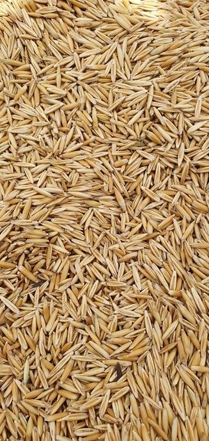 Cleaned bunderlong oats
