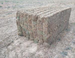165mt Vetch Hay 650kg 8x4x3 Bales